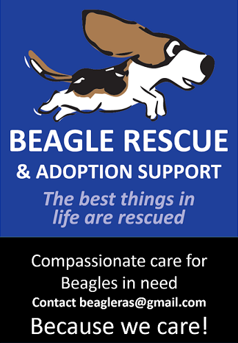 Beagle Rescue And Support Thumb Image