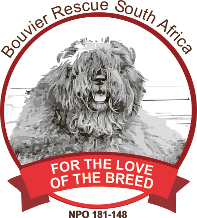 Bouvier des Flandres Rescue South Africa Thumb Image