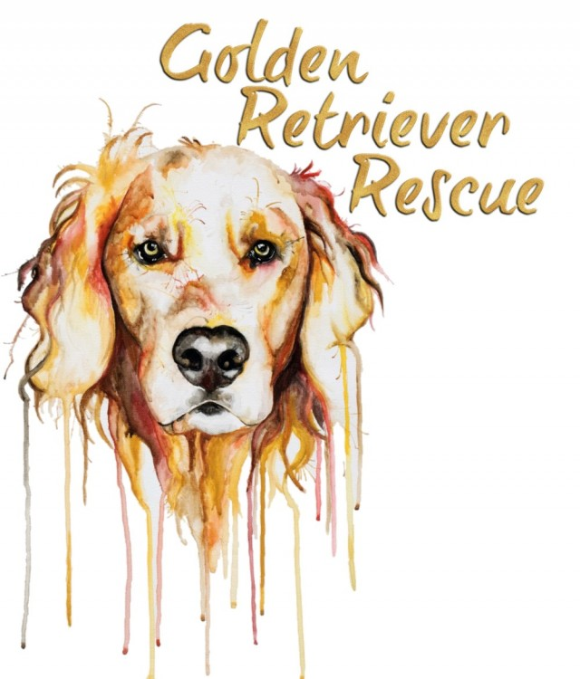 Golden Retriever Rescue - South Africa Thumb Image
