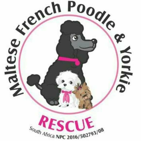 Maltese, French Poodle & Yorkie Rescue South Africa Logo