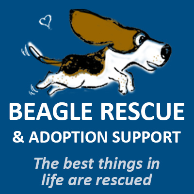 Carlos' 947 Challenge for Beagle Rescue