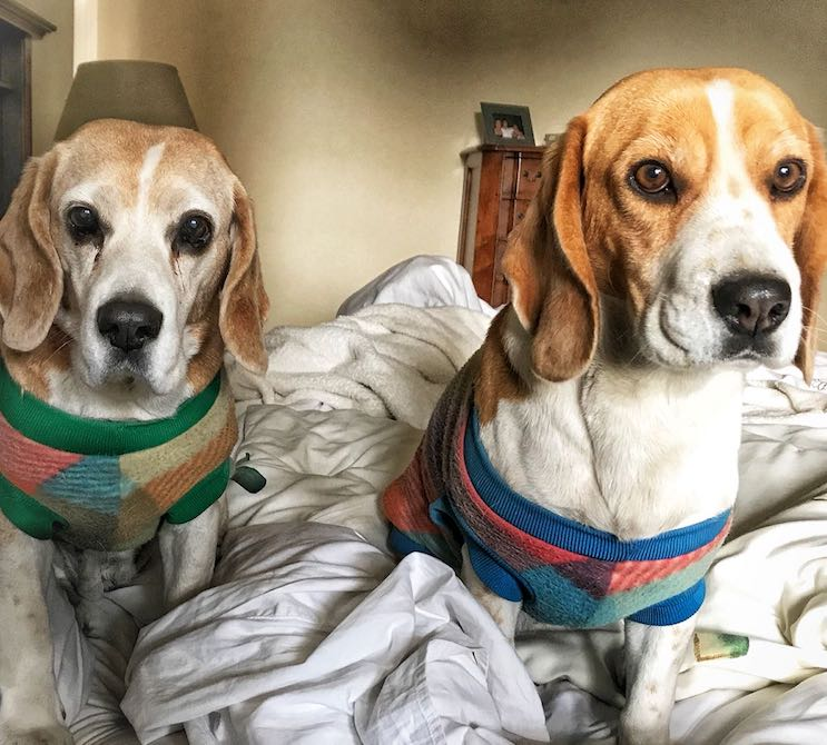 Marie-Anne & Stephen - Telkom 947 for Beagle Rescue 2018