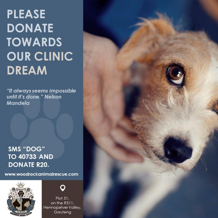 Woodrock Animal Rescue Clinic Dream - Phase 1  #woodrockclinicdream