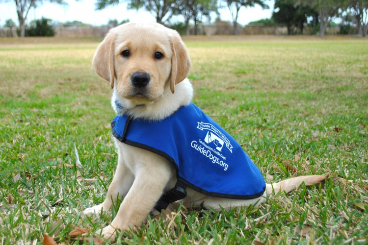 Warrior race: Investec Asset Management for the SA Guide Dogs Association